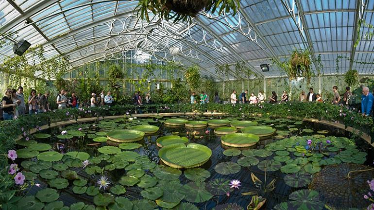 Kew_Gardens_Waterlily_House