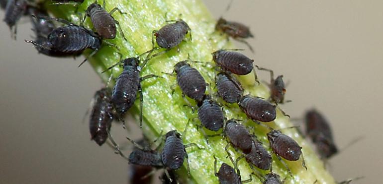 Garden Pest Identification Images