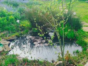 Wildlife Pond, St. Andrews