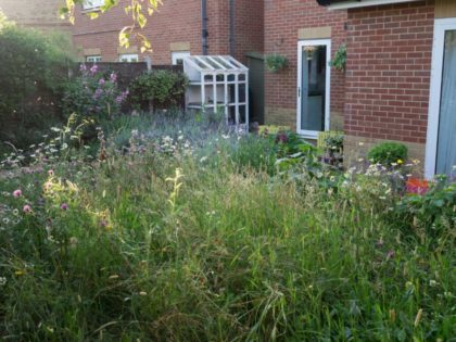 Planting with Meadow, Emersons Green
