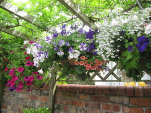 Hanging Baskets Created By Us